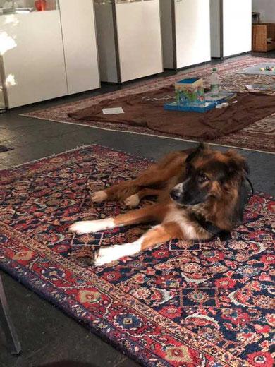 Luca genießt sein neues Leben in Grünwald.