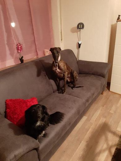 Unsere Angstnase Nala (Espiral) fand ein liebevolles Zuhause mit Hunde- und Katzenkumpel in Büren-Steinhausen.