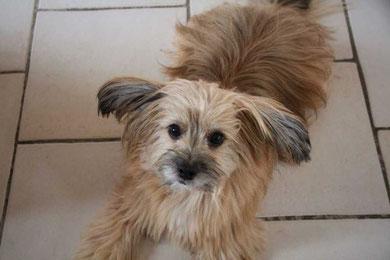 Chewy (Marcelino, Leo)