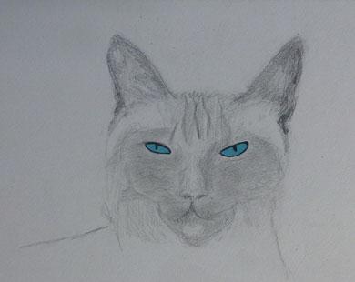Katze von K. 12 Jahre