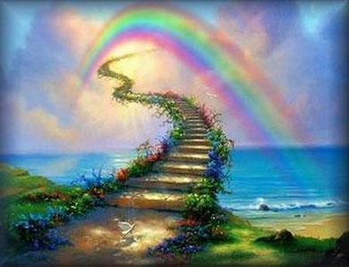 Auf der andern Seite der Regenbogenbrücke warten all meine Sternenkatzen auf mich