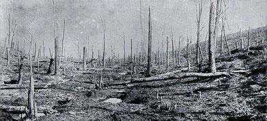 zerschossener Wald Verdun