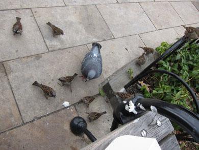 落としたケーキにむらがる鳥たち