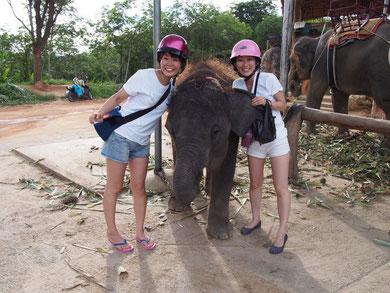 小象は意外と毛深い