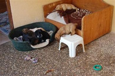 Das Hochbett in Haus 2