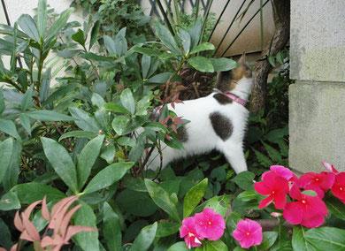 花となかなか手強いビーちゃん
