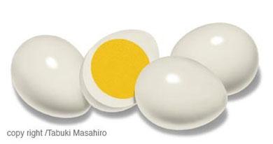 ウズラのゆで卵 イラスト 黄身 白身