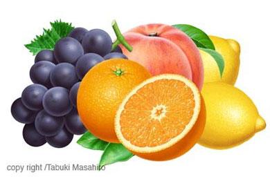 ブドウ、オレンジ、モモ、レモン フルーツイラスト fruit illustration