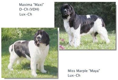 Maya-Maxi