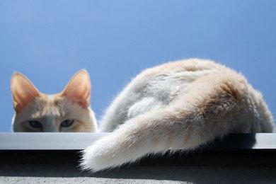 おとんをつけ狙うゴルゴ13のようなストーカー猫の目
