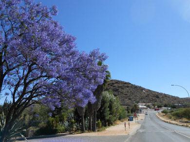 ジャカランダ at Klein Windhoek