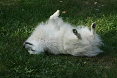 Joy in rolling in the grass