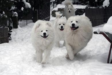 Gorki, Luna, Alisha & Trouble
