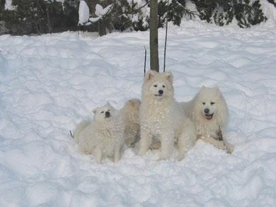 Izumi, Emely, Fee, Alisha