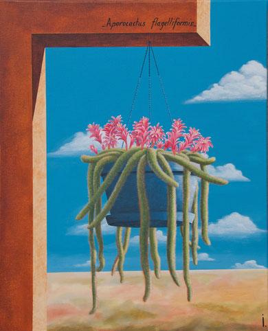"""""""Aporocactus Flagelliformis""""- 50 X 61cm"""