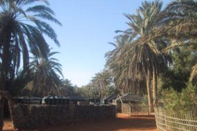 Campement Paradis Ksar Ghilane, Sahara