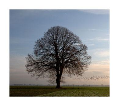 Der Baum und seine Freunde