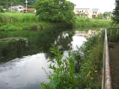 忍野、鐘ヶ淵堰堤のプール