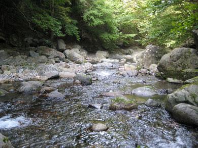 入川渓流観光釣場の上流