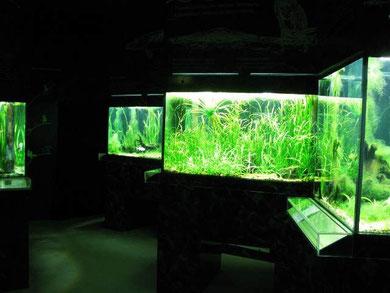 Unterwasserreich Schrems