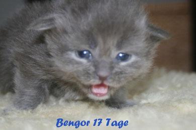 Bengor 17 Tage