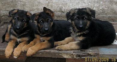 Есталь,Дэо и Диктатура фон Нордэн,2 мес.