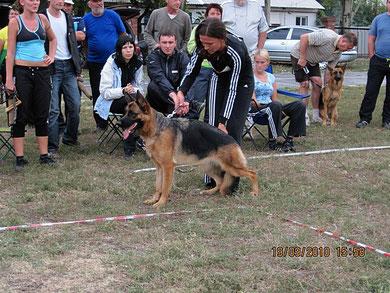 Мафия Норд Шторм 1 место в юн.суках из 7 собак
