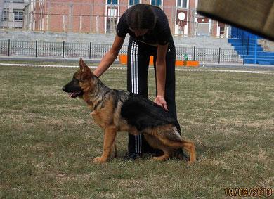 Виннер Канис Оптимас(Маркус ф.Статус Кво-Фифа Канис Оптимас)-3БП в кл.бэби из 7 собак(кадр увеличивается при нажатии)