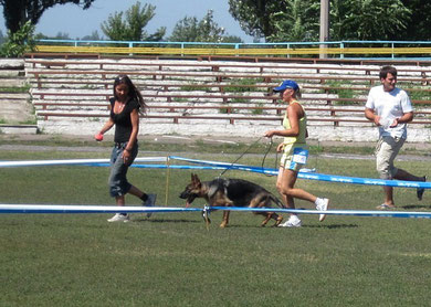 Жанди фон Нордэн(Ярант фон Нордэн-Шанта фон Нордэн)-4БП из 11 собак в ринге