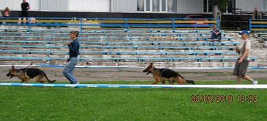 Леста Остлих Аусваль(2БП) и Нарния Штольц Фатерланд(1БП) в классе щенков