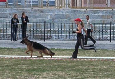 Лайтатурм Лука(Халлюкс ф.Бату-Лайтатурм Даки)-3 место из 10 собак в кл.мол.(кадр увеличивается при нажатии)