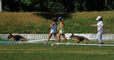 """Швальбеннест Кампари(6""""оч.хор."""") и Германика фон Нордэн(7""""оч.хор."""") в классе молодых сук(11 собак в ринге)"""