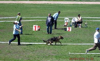 """Нарния Штольц Фатерланд(Конан из Дома Димона-Нэмби фон Нордэн),3-е место """"большая перспектива"""" в классе щенков сук."""