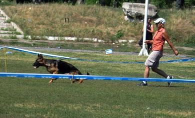 Полицейская Собака Урсула(Асто ф.Колумбус-Полицейская Собака Шкода)-6БП в классе подростков-сук