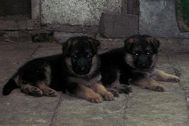 Зондеркоманда(слева) и Зигерин(справа) фон Нордэн,33 дня(Ярант фон Нордэн-Шанта фон Нордэн)