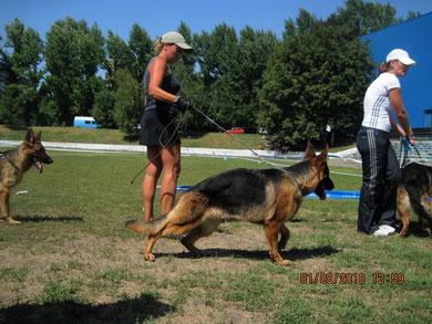 Мазератти Прима(Рахимжан Шон-Яна ф.Хаус Калбах)-Победительница класса молодых сук(11 собак)