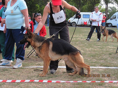 Лайтатурм Лука(Халлюкс ф.Бату-Лайтатурм Даки)-3 место из 10 собак в кл.мол.