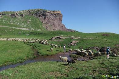 Transhumance en Haute Vallée d'Aspe des bergers de Bedous à la Montagne de Banasse, au fond le Mailh de Lauda.
