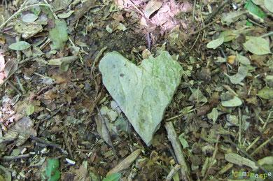 Cœur sensible, pointe de flêche de Cupidon, talisman ventriculaire, émeraude du pauvre ...