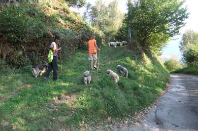 Le berger et ses chiens distancés par le troupeau pressé de rejoindre l'Ourdinse