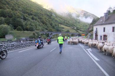 Le Peilhou résonne du grondement des bikers et du piétinement des brebis...
