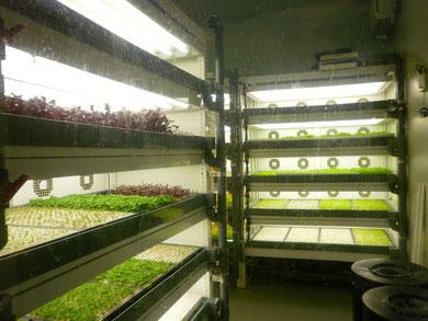 野菜工場!