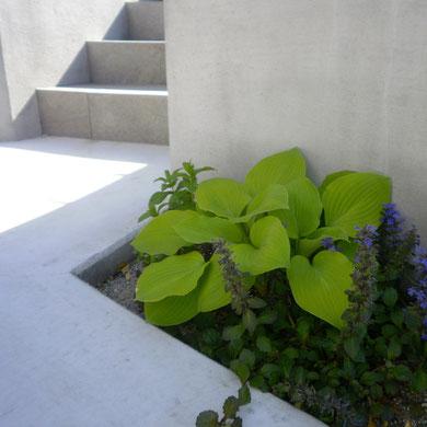 外構の中でおすすめの植栽④(シンプルモダン)