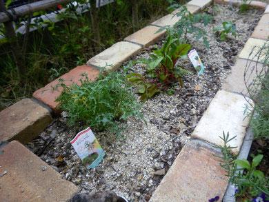 お庭での家庭菜園の場合②新たに土を入れる場合