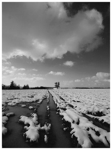 Winter auf der Kirrberger Höh