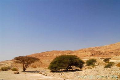In der Negevwüste Israel