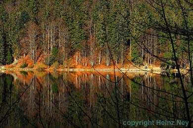 Spiegelung im Feldsee Feldberggebiet
