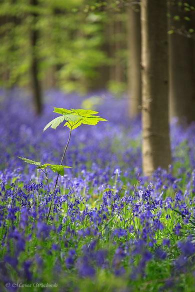Und der Wald wächst...