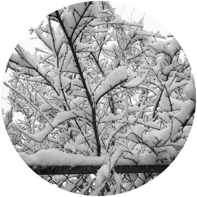 府中市に積もった雪