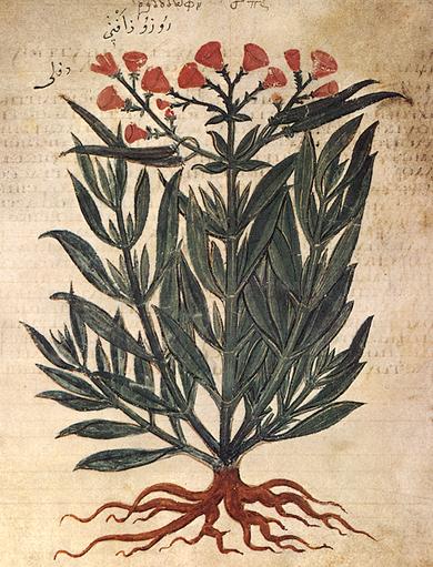 Rhododaphne (Oleander), Wiener Dioskurides